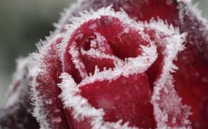 frost-flower-